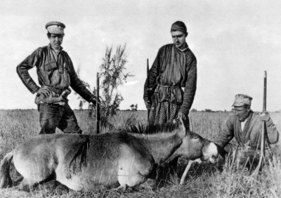 Przewalski hunted by Grigory and Michael Grum-Grzhimailo