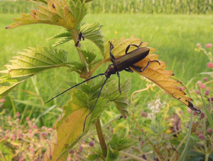 Beetle, insect