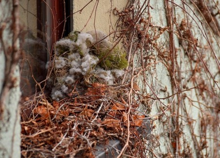 Squirrel winter retreat