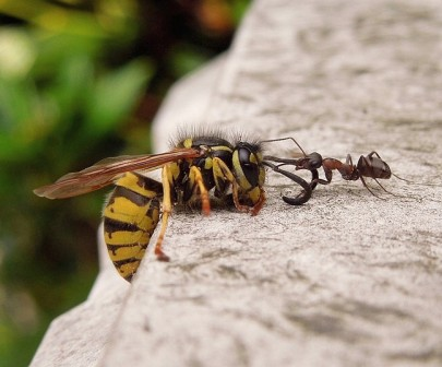 The ant & the wasp
