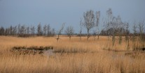 Salt marshes & reed beds, Fischland-Darss-Zingst